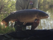 Liam Slee with a 22lb club record Ghost Carp, caught at Heritage Lake, 23 April 2015.